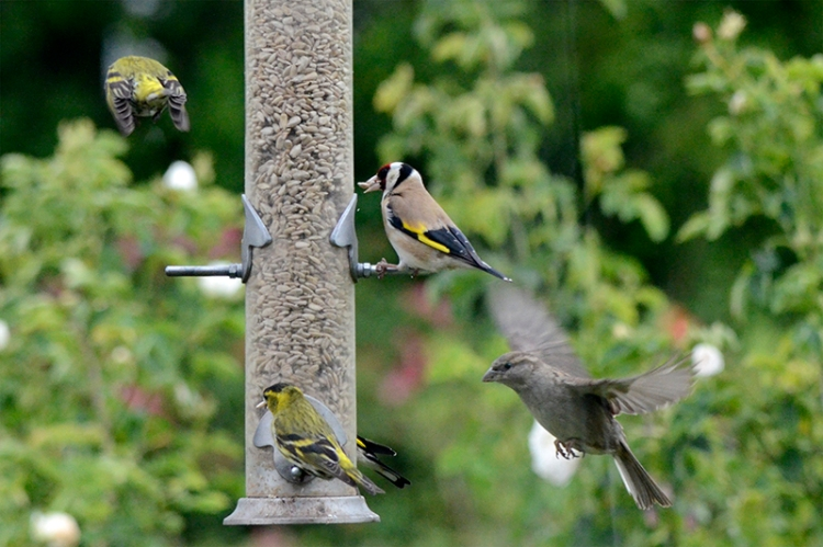 busy feeder on pole day
