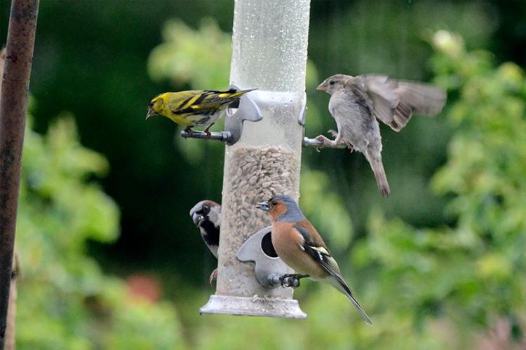 busy new feeder