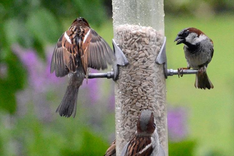 decorative sparrow