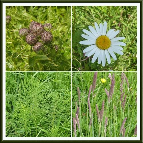 dull wild flowers