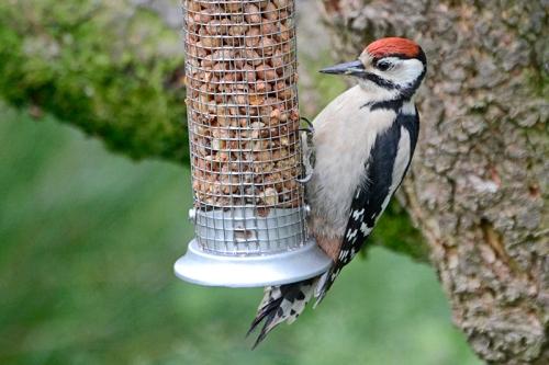 excellent woodpecker