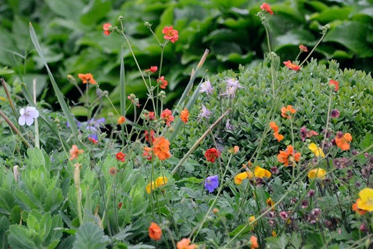 flowers beside feeder
