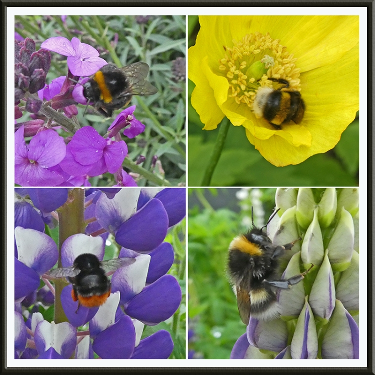 four bees on flowers
