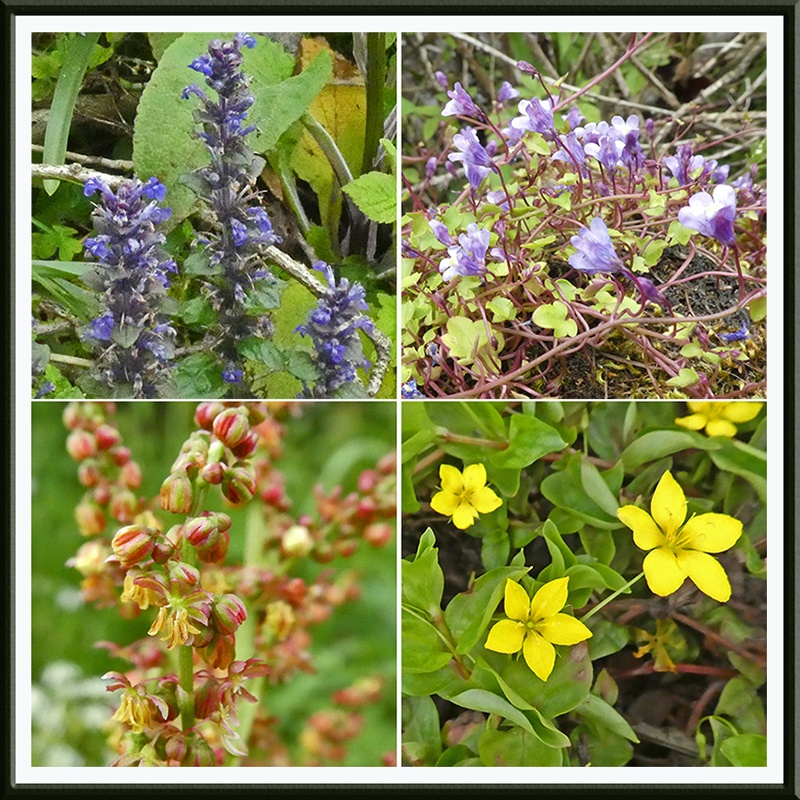 four more wild flowers