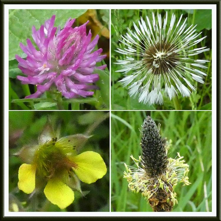 four wild flowers scholars