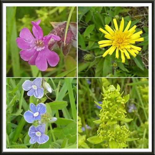 four wild flowers