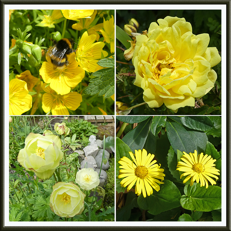 four yellow flowers