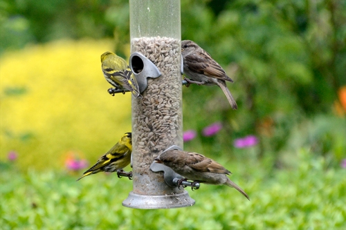 full new feeder