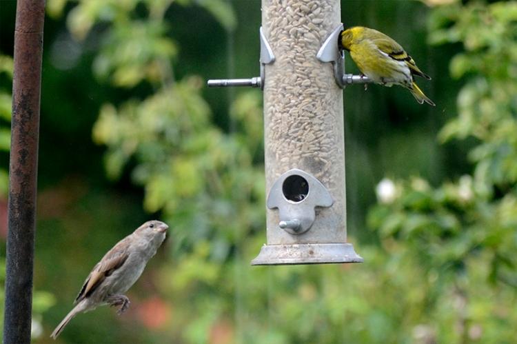 hopeful sparrow