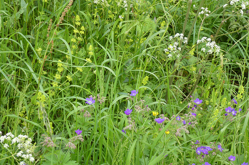 lots of wild of flowers
