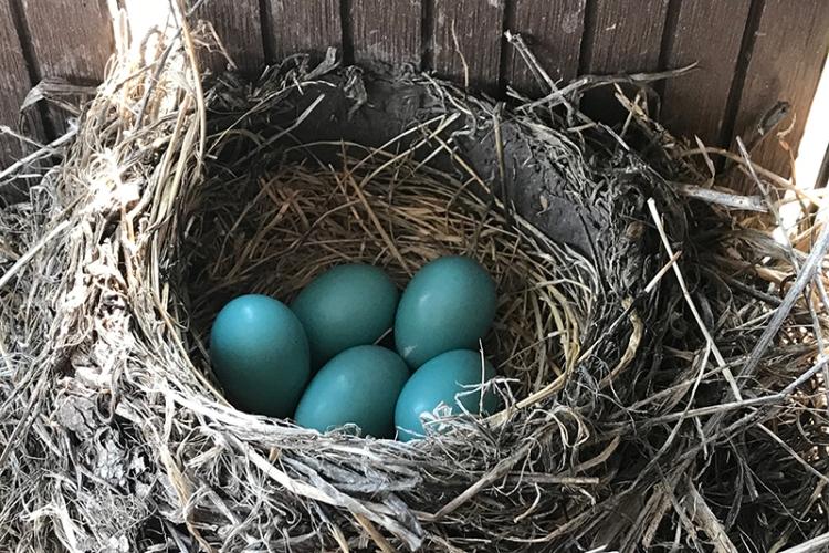 Mary Jo's eggs