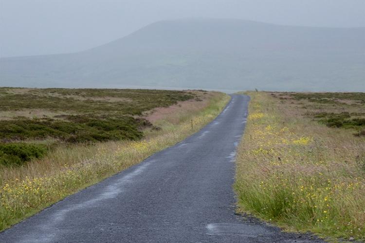 moor road with wildflowers