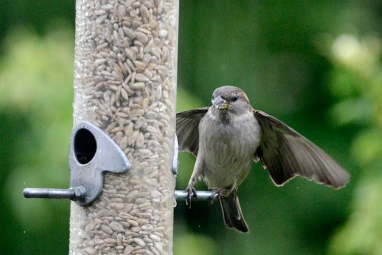 nf sparrow landing