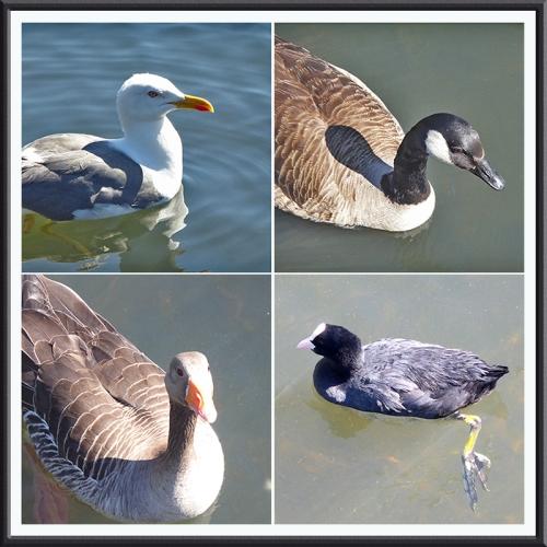 pond life Lochend