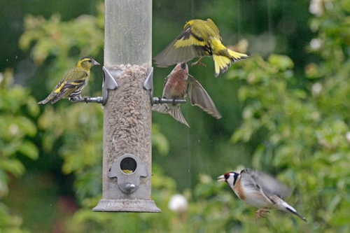 rain at the new feeder