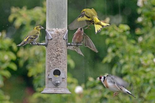 rain at the new feeder