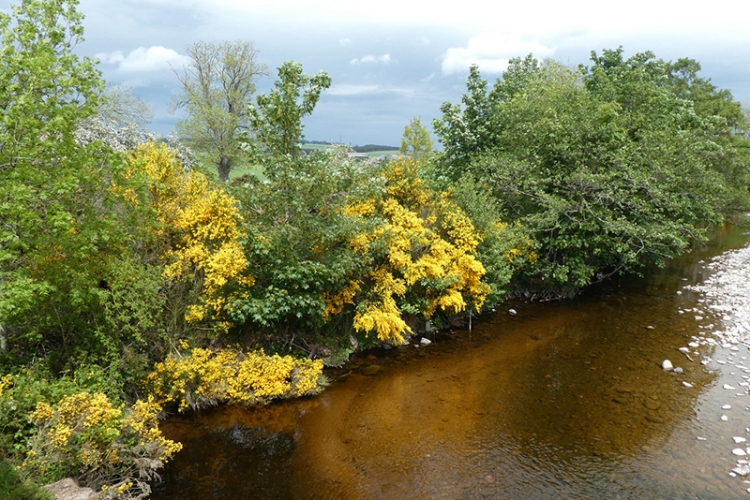 river breamish view