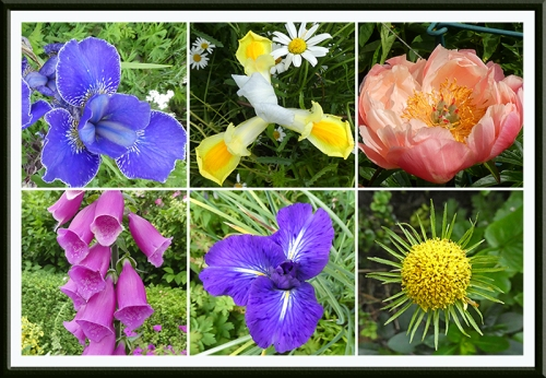 six bright garden flowers