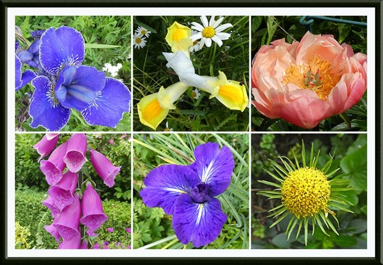 six bright garden flowers