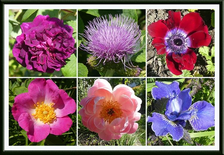 six brilliant flowers