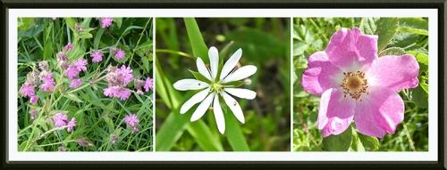 thre wild flowers warbla track