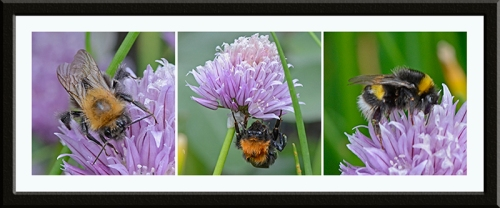 three bees on chives