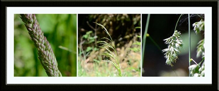 three grasses tarras