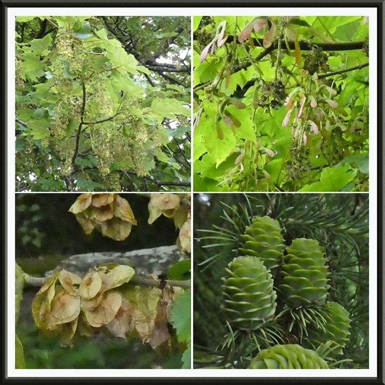 tree fruits castleholm