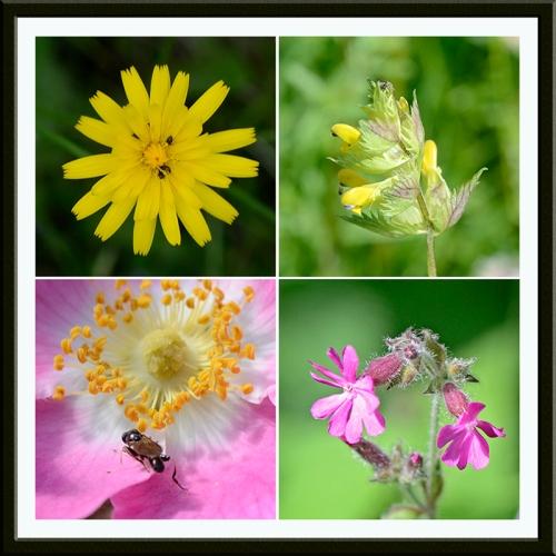 wild flowers tarras