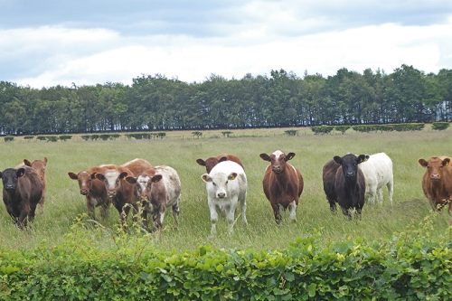 a load of bullocks