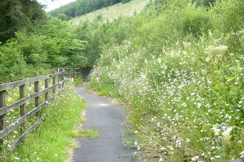 bike path with daisies