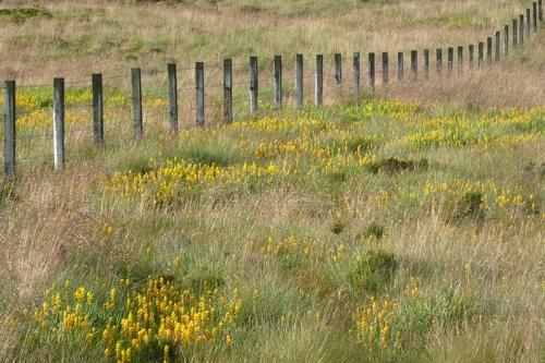 bog asphodel and fence