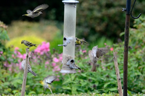 busy feeder from outside