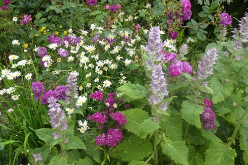 colourful corner with salvias