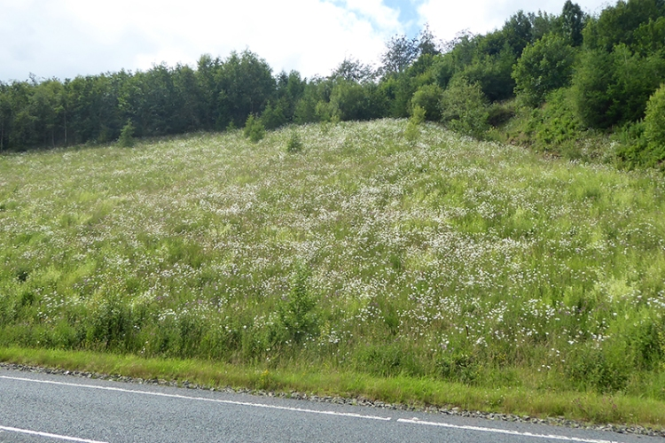 daisies on new A7
