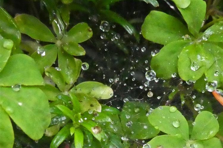 droplets on web