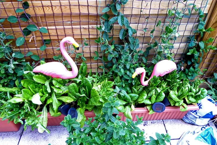 flamingoes in Edinburgh