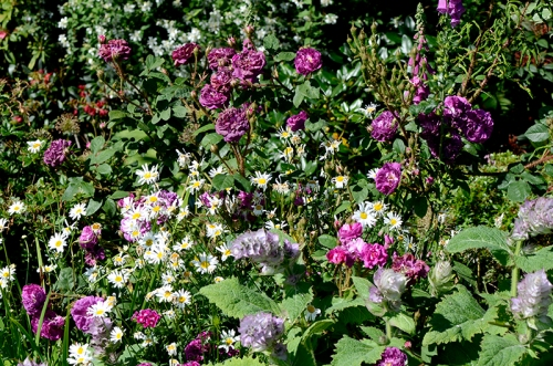 flower bed view july 2