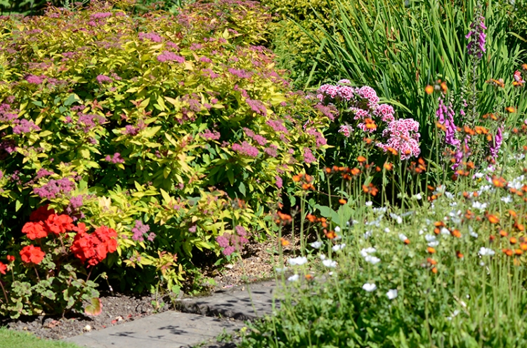 flower bed view July 3