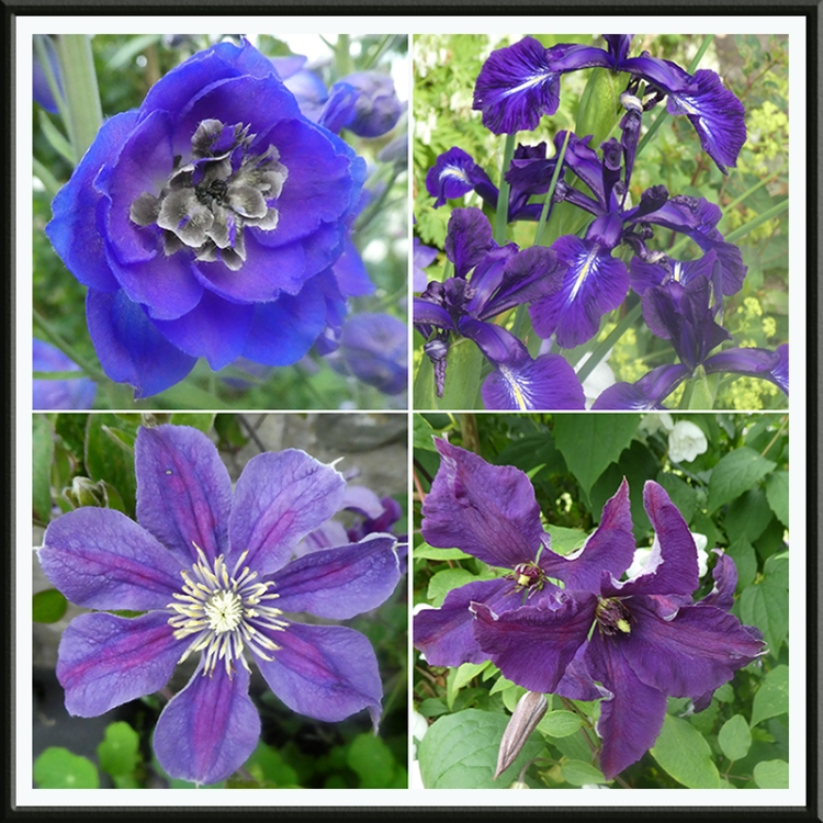 four blueish flowers