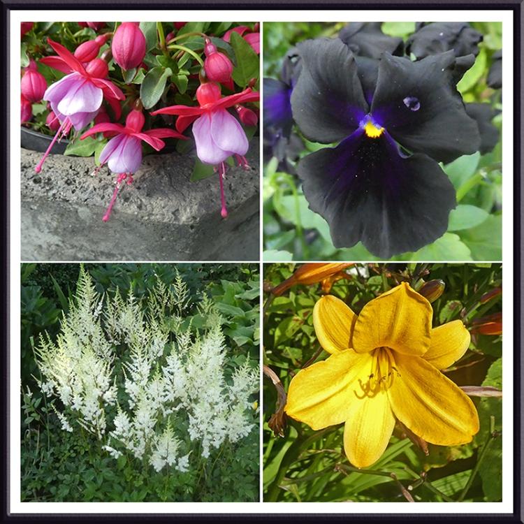 four lovely flowers