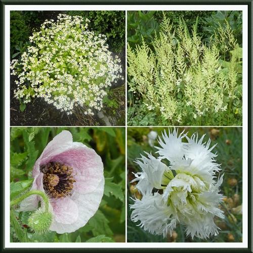 four pale flowers