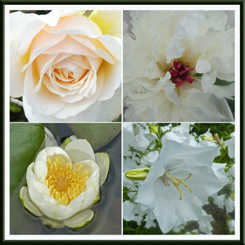 four pale flowers