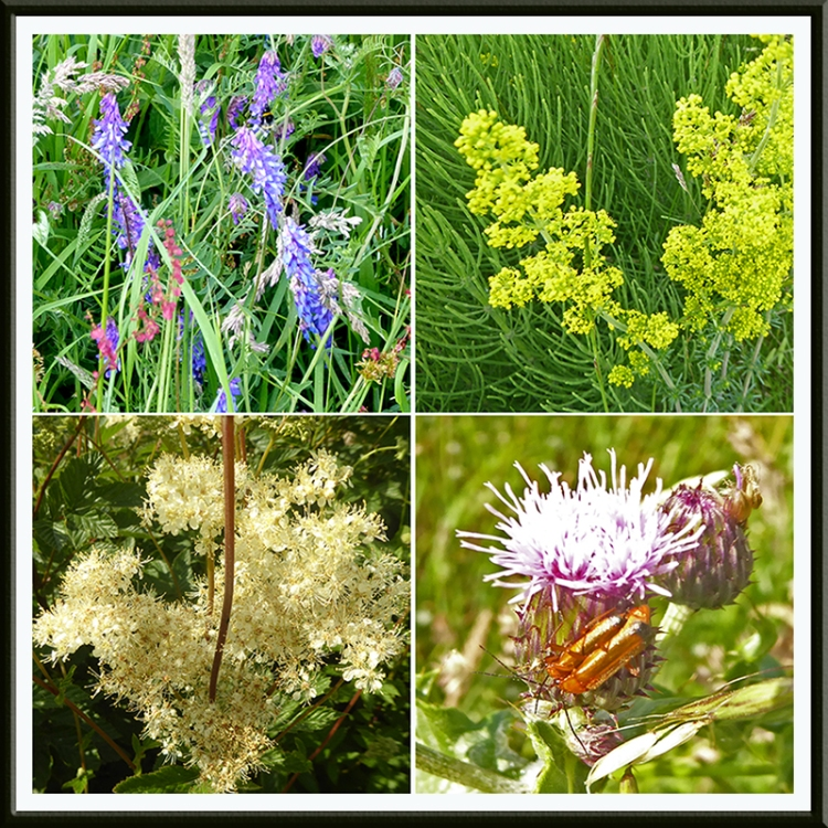 four wauchope wild flowers