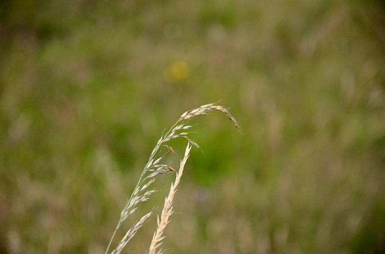 grass CR 2019