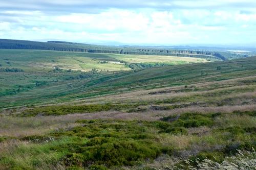 Langholm Moor July