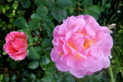 Lilian Austin pair