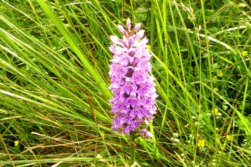 orchid by road