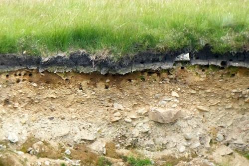 sand martin nests