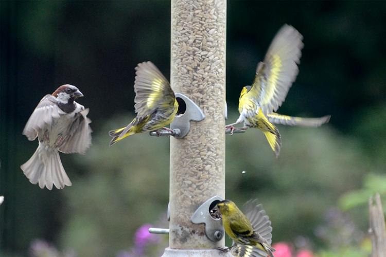 sparrow arriving